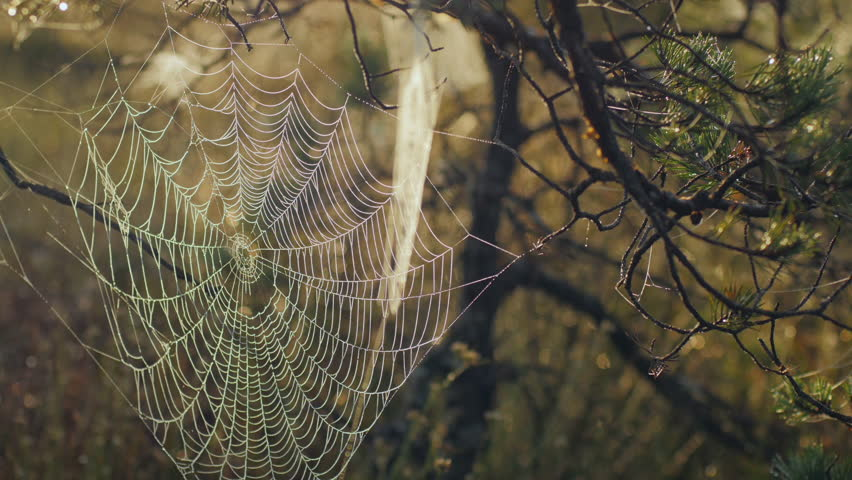 spiderweb on a tree in the forest stock footage video 7418923 shutterstock. Black Bedroom Furniture Sets. Home Design Ideas