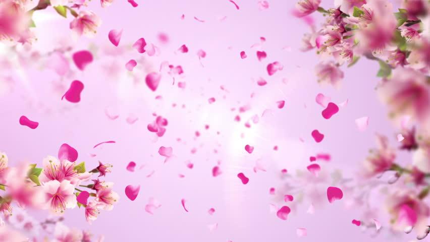 Animation of falling petals of sakura with flowers sakura waving on wind. Animation of seamless loop. - HD stock footage clip