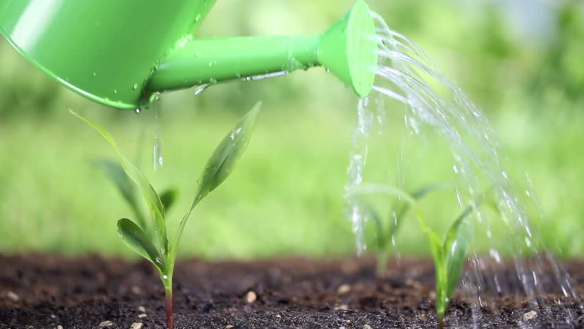 water the plants in the garden - HD stock footage clip