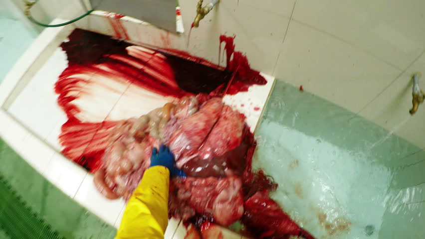 Disgusting first person view from butcher perspective of animal internal organs in abattoir cleaning room
