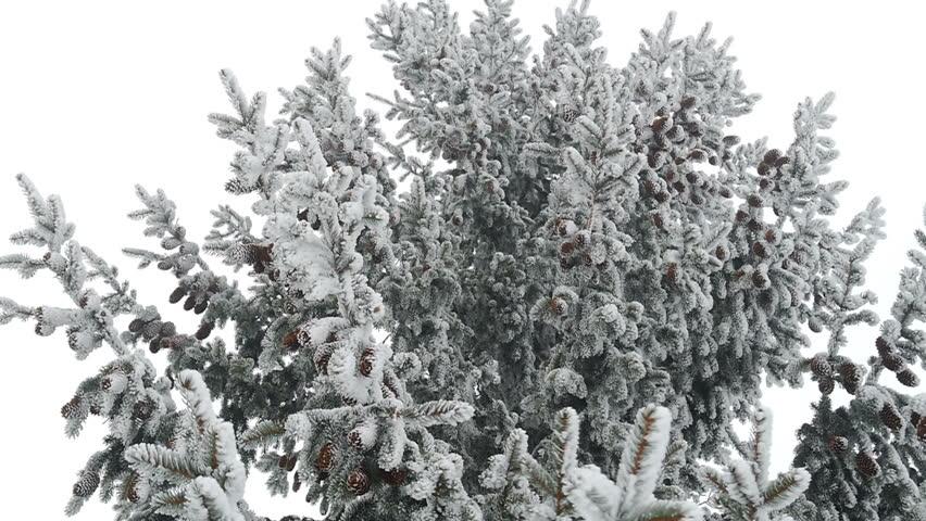Winter landscape with snow in mountains Carpathians, Ukraine - HD stock footage clip