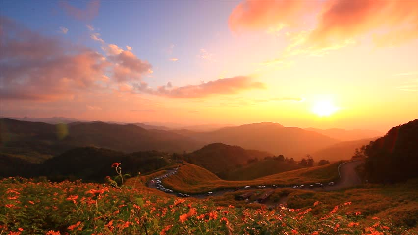 Landscape sunset nature flower Tung Bua Tong Mexican sunflower in Maehongson (Mae Hong Son) Province, Thailand.