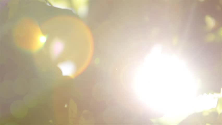 vineyard with lensflare  - HD stock video clip