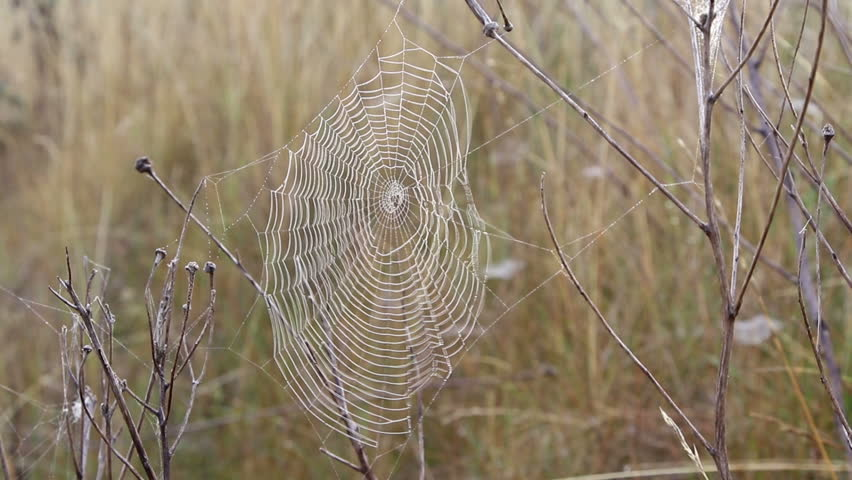 Web on a wind