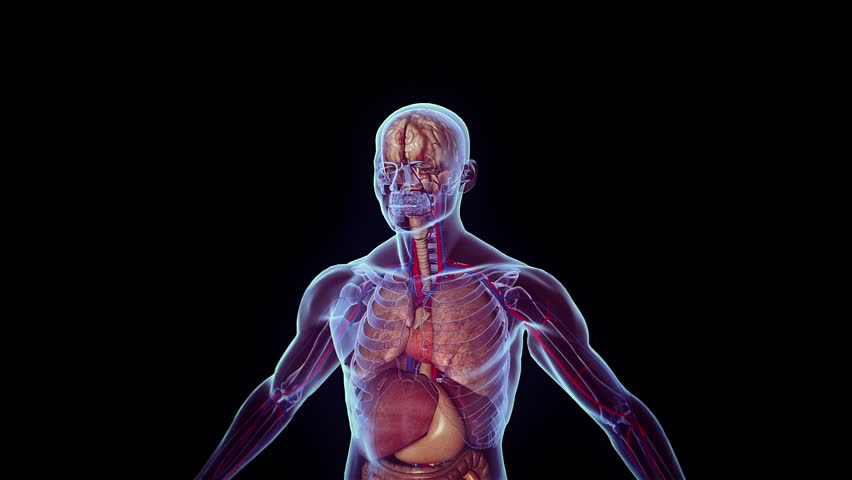 3d medical animation - HD stock footage clip
