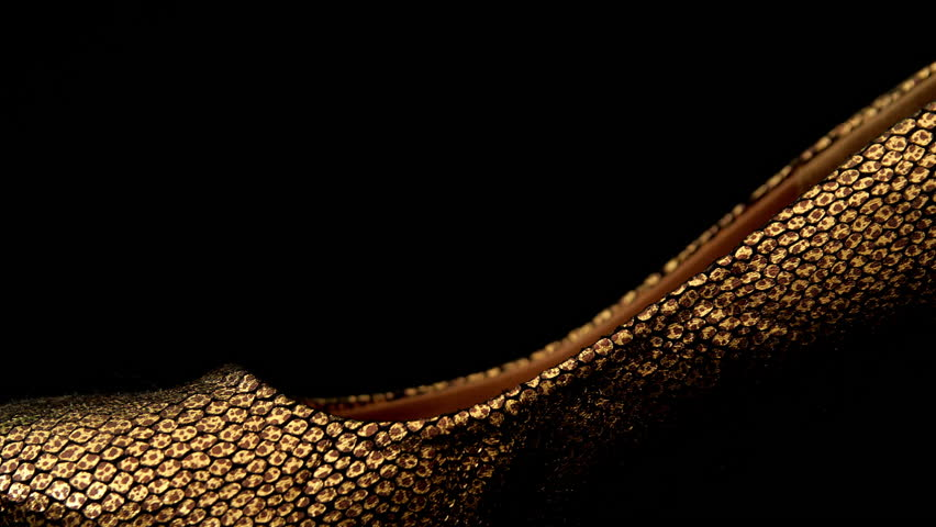 Ladies Gold high heel shoe HD stock footage. Close up sliding shot of a Golden Ladies high heeled shoe with negative space for text overlays.