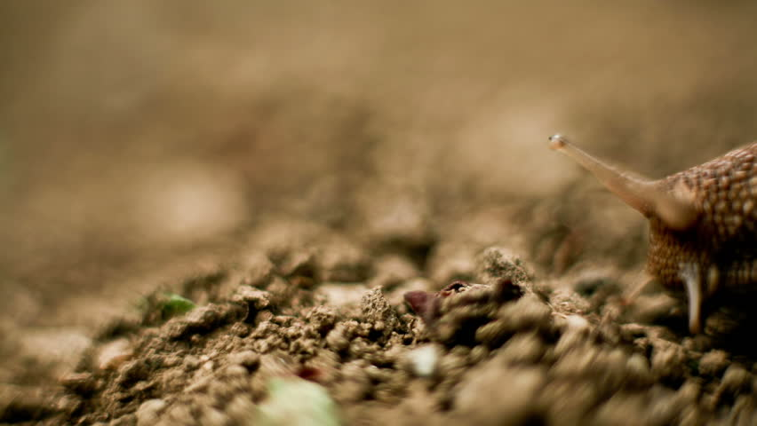 Snail walking from left to right macro time lapse HD video