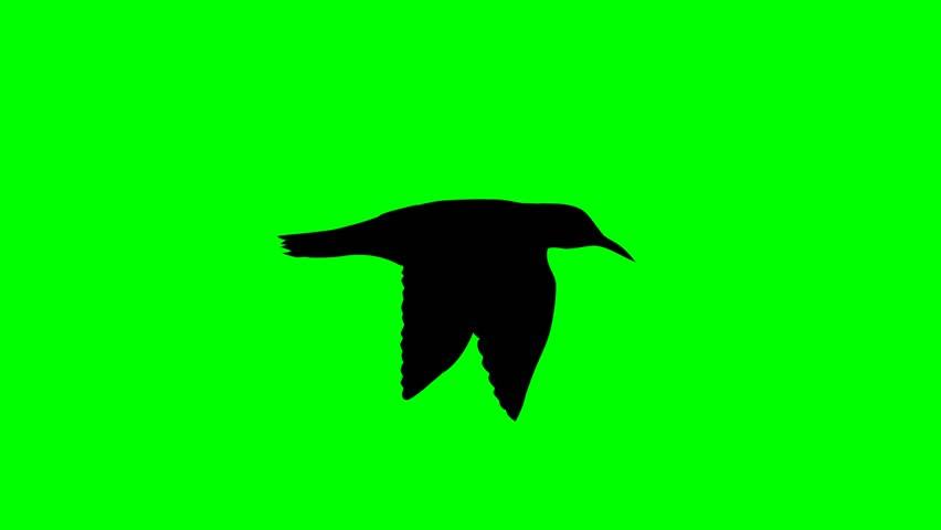 Bird fly side loop 10 sec / Birds Silhouette 05