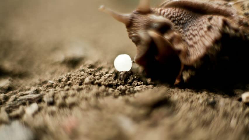 snail movement