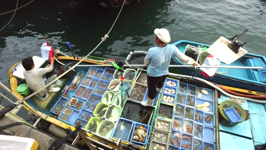 CHINA, Hong Kong - Circa 2015: Sorting fish in on boat fish tanks ready for selection by customers at the dock.