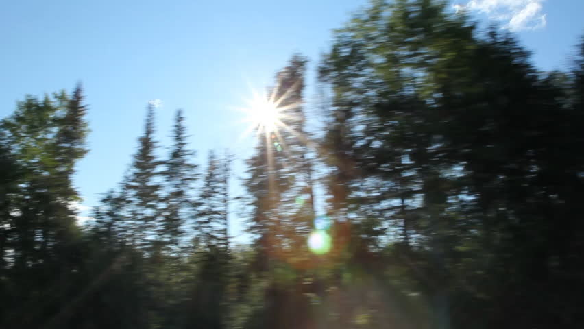 Driving. Sunny trees. Driving on rural highway. Sunshine through coniferous trees. Maine, USA.