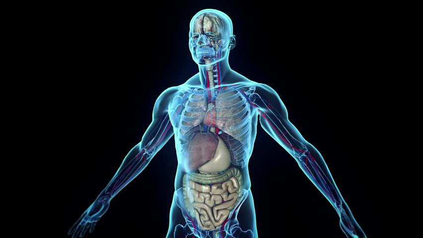 3D human body in loop rotation - HD stock footage clip