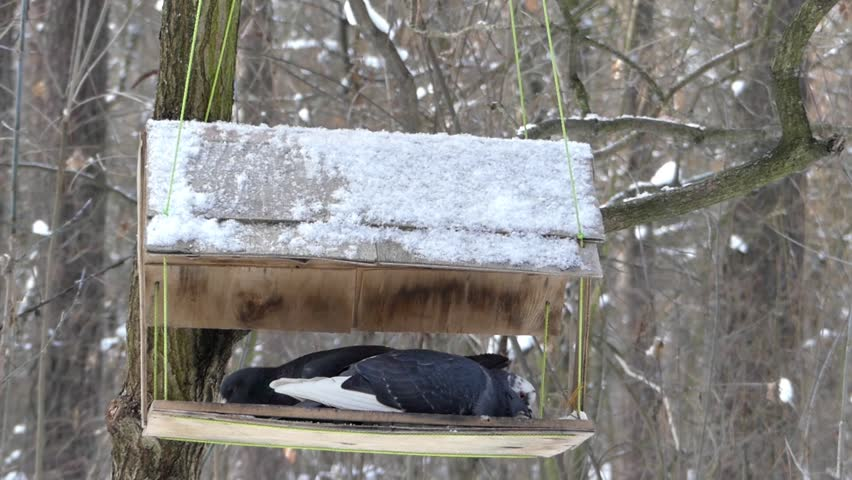 how to build a platform bird feeder with roof
