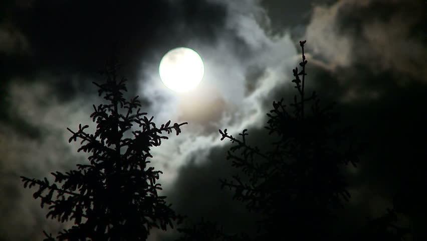 Full moon, pines and clouds at night - HD stock footage clip