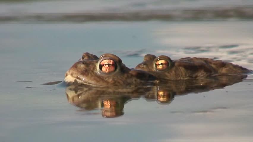 Frog Sex Movies 78