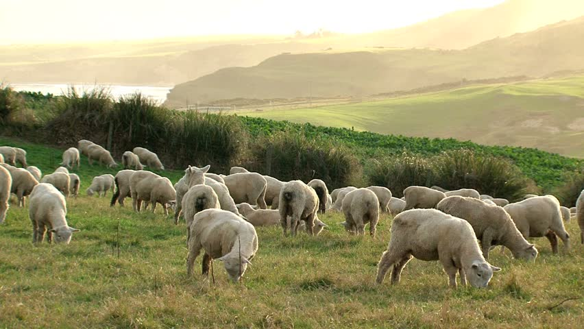 Header of New Zealand