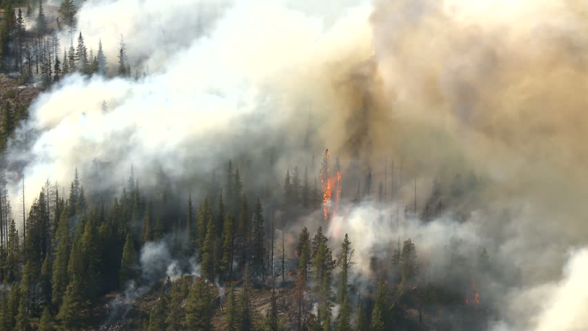 forest fire aerial flames - HD stock footage clip