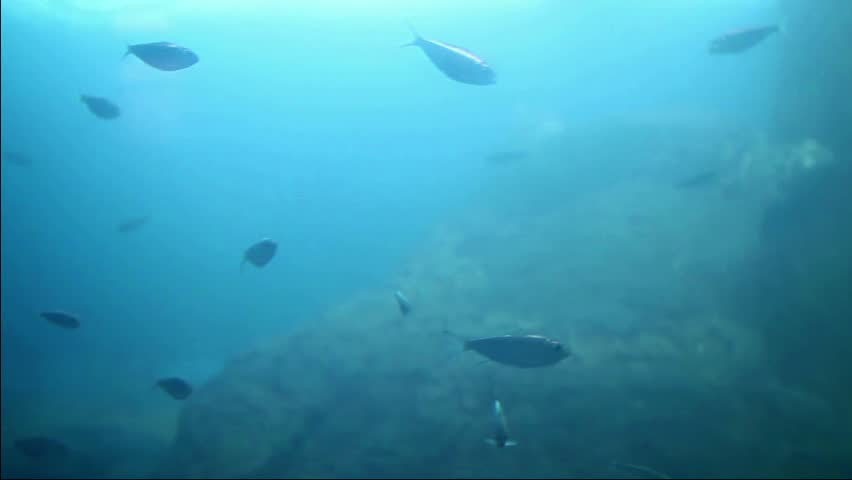 shoal fishes - HD stock video clip