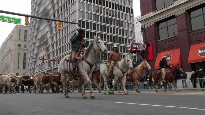 DETROIT - CIRCA 2010: Man on a horse leads bulls through a city street. - HD stock footage clip