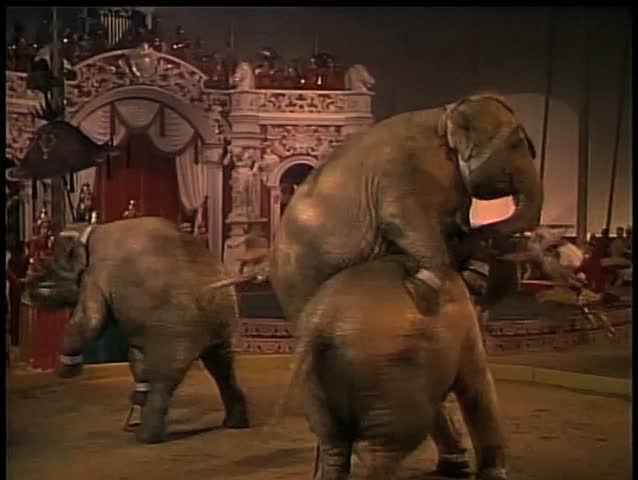 Dancing elephants performing in circus