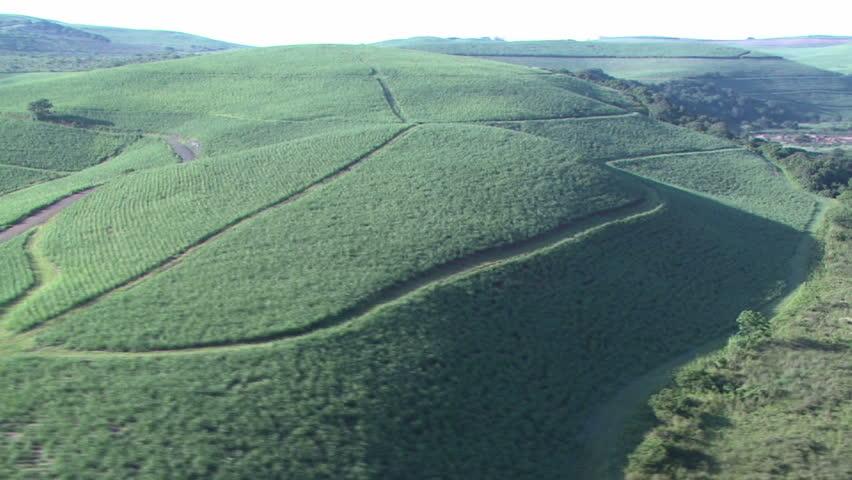 Sugarcane aerial 5 - HD stock video clip