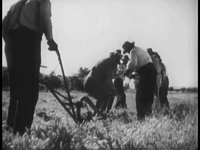 Rear view of men plowing field
