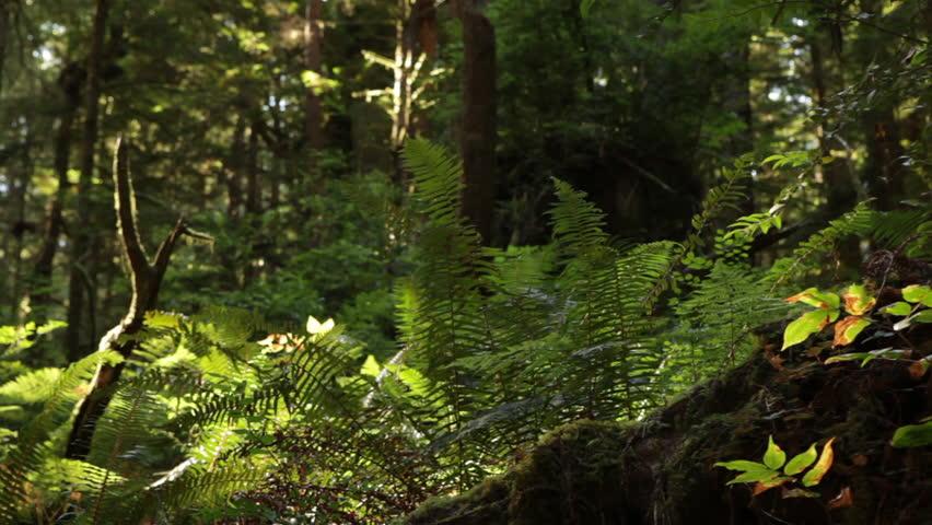 Redwood forest ground growth