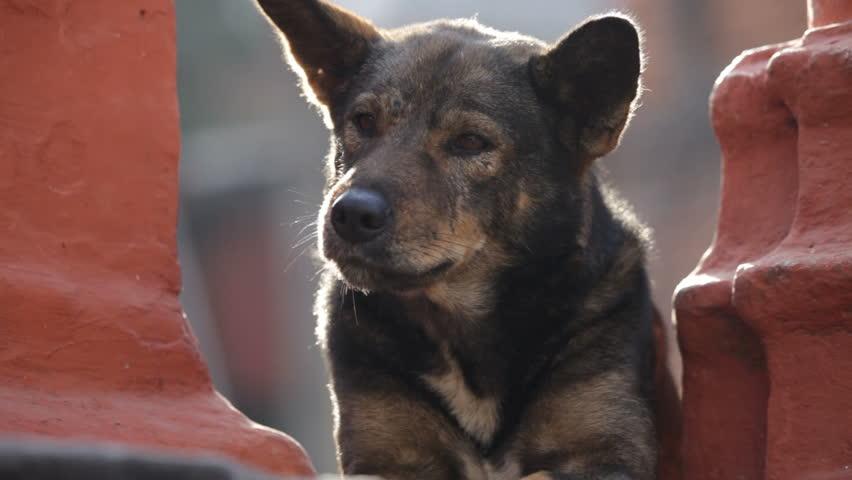 Dog. - HD stock video clip