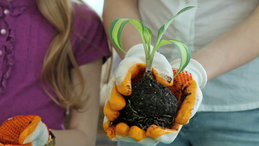 Close-up of people passing each other a young plant, girl smiling happily