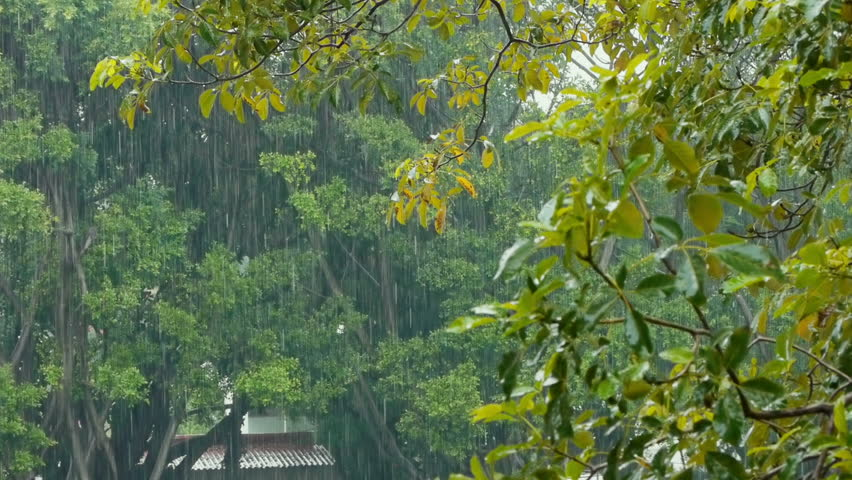 Heavy Rainstorm With Trees and a Far Away Building with Audio. - HD stock footage clip