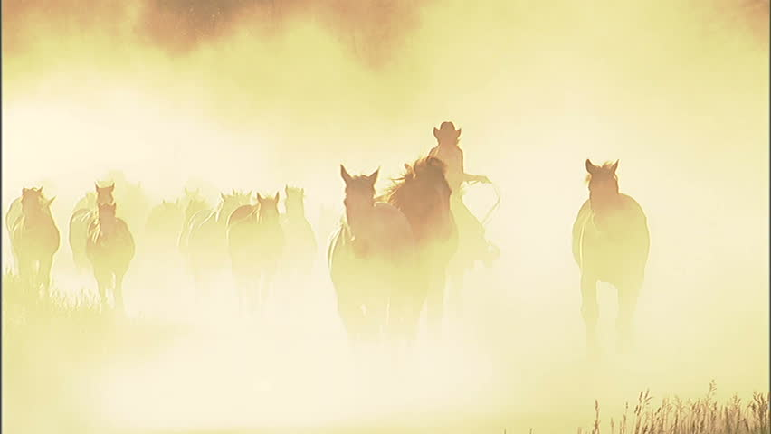 Backlit cowgirl herding horses along a dusty country road.