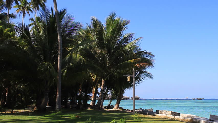 hawaiian paradise island palms - photo #13