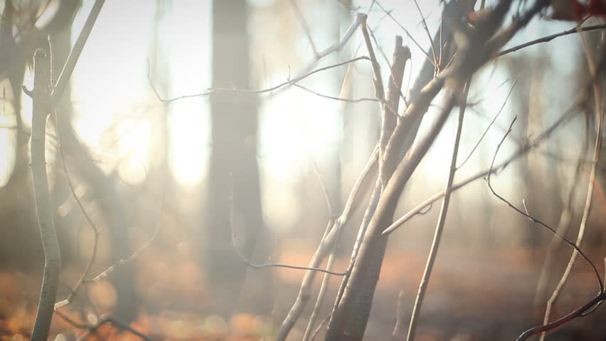 Intro, branches in the woods. dolly shot.