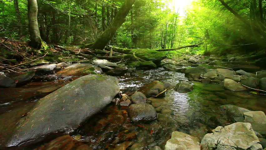 mountain stream in the forest - HD stock footage clip