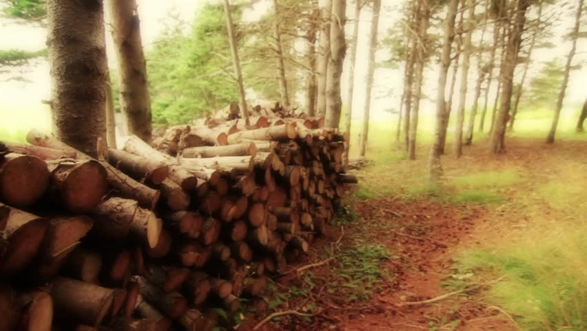 A pile of firewood in a forest
