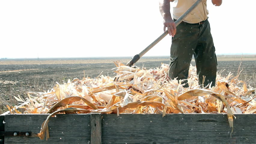 Farmer at work. Man using a pitchfork for seasonal autumn work. HD1080p.