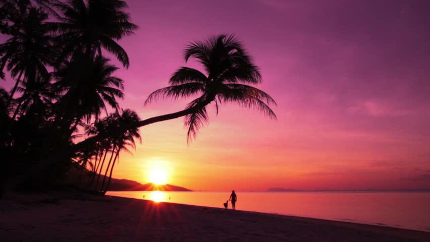 Tropics Palm Trees Sun Beach 4k Hd Desktop Wallpaper For: 1.jpg
