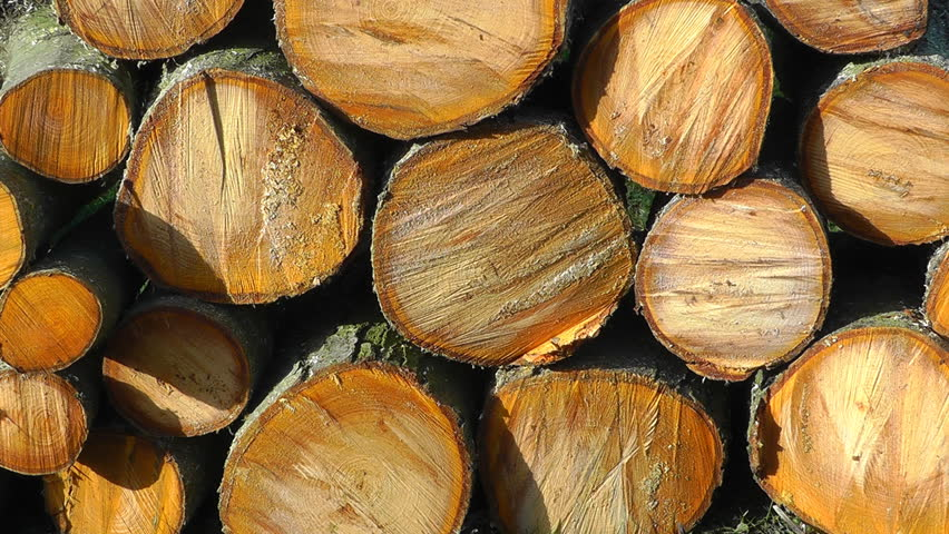 A stack of sawn up logs