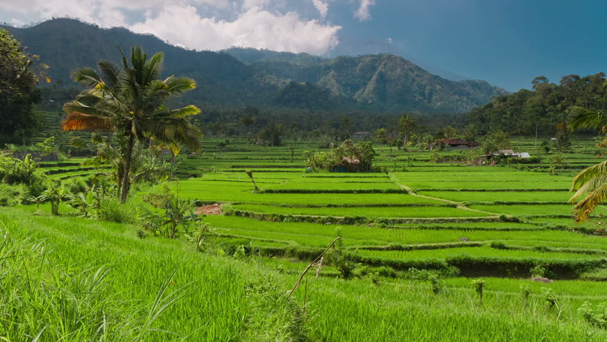 Timelapse of rice plantation against Agung mountain in Indonesia, Bali