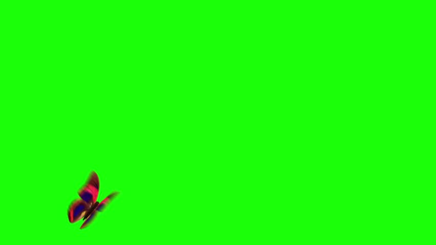 flying butterfly with green screen - HD stock footage clip