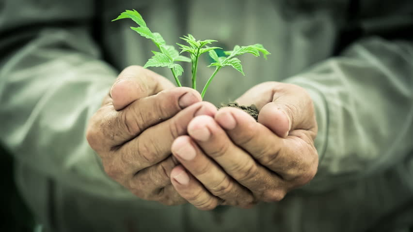 Old man`s hands holding green young plant. Ecology concept