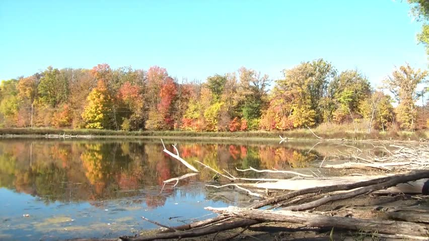 Driftwood lines the banks of this glassy calm lake at dawn, in fall season, with colors peaking on trees.