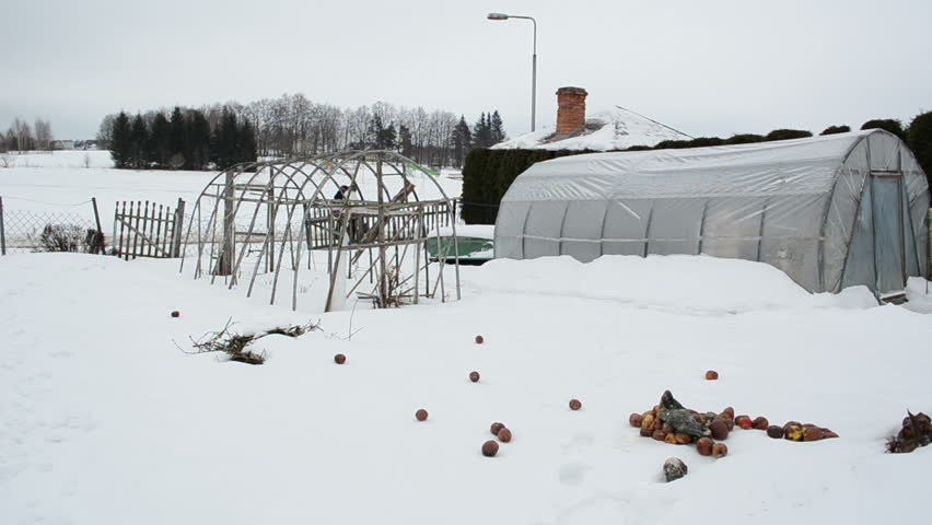 wooden diy homemade polythene greenhouse covered with snow and rotten apples in winter garden. people walking. - HD stock footage clip