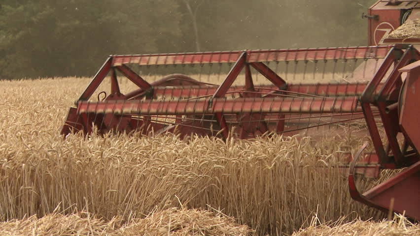 Combine blades harvesting wheat