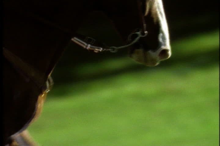 Legs and head of horse as it gallops in slow motion,