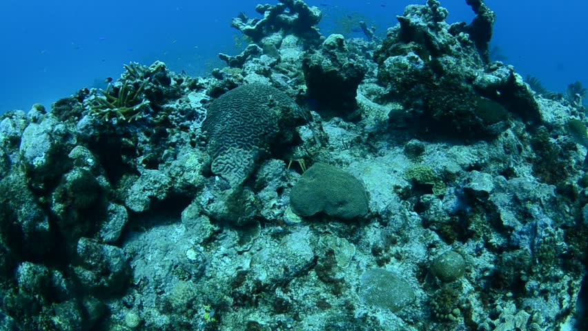 Scenics from caribbean reefs - HD stock footage clip