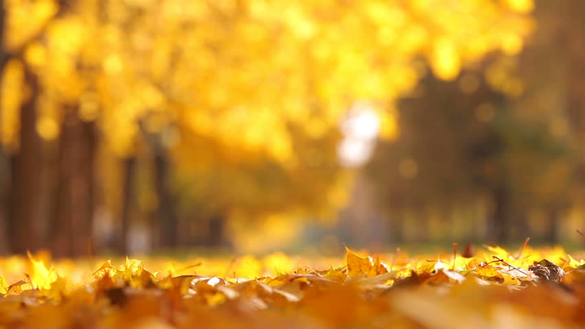 Leaf fall in the autumn city park. Beautiful background