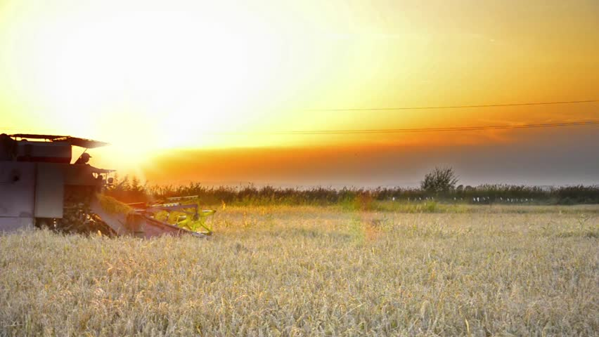 Harvesting at sunset - Stock Video. Combine collecting the crops - HD stock footage clip