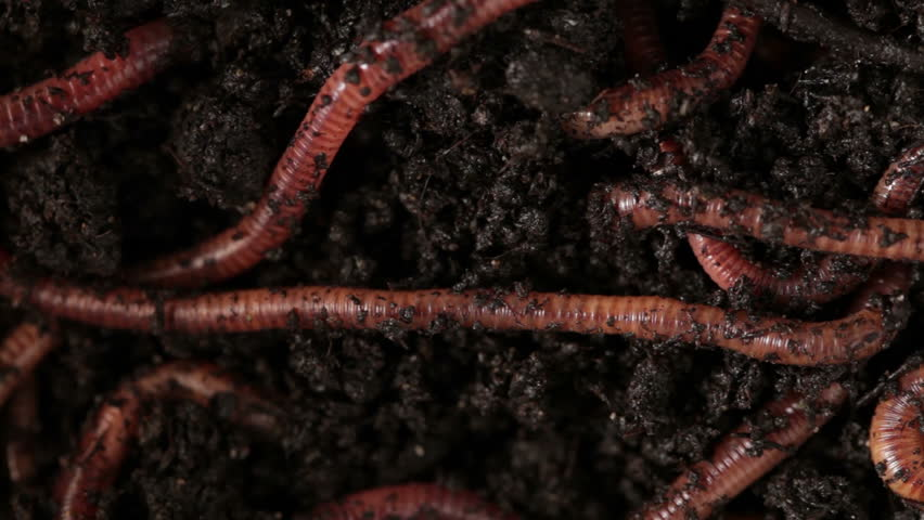 earthworms - HD stock footage clip