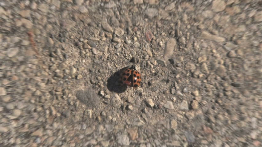 Beginning with a close up of a ladybug on the pavement, then zooming out to reveal the entire earth, sun, and the Milky Way galaxy. 